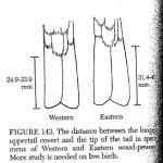 figure-143-pyle