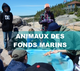 Animaux_fonds_marins3