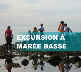 Excursion_marée_basse3